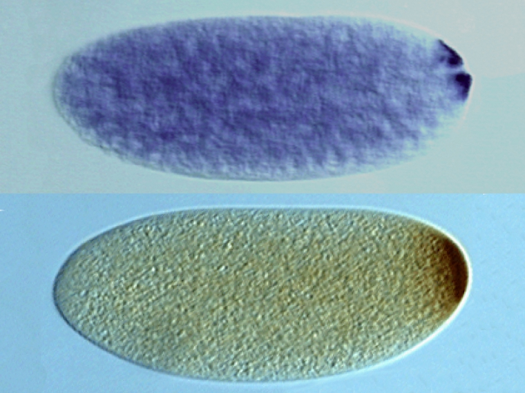 Gene-expression-nosmRNA_protein2