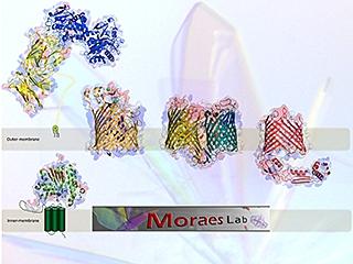 Moraes Lab