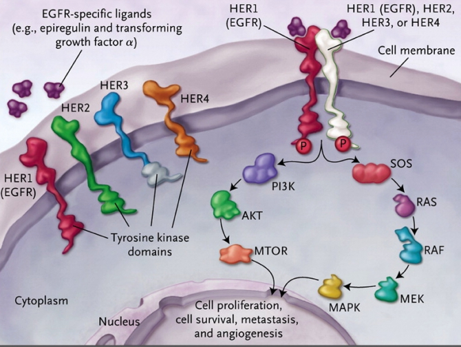 cell signaling inhibitors how to use