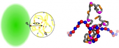 Fuzzy complexes involving polyelectrostatic (left) and polycation-pi (right) interactions (Borg et al., PNAS 2007; Song et al., PLoS Comput Biol 2013).