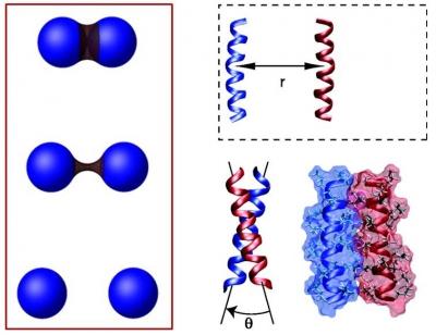 Entropic, enthalpic, and volumetric effects of hydrophobic association (MacCallum et al., PNAS 2007; Dias & Chan, J Phys Chem B 2014).