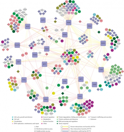The yeast ABC transporter interactome [Snider et al (2013) Nat Chem Biol], Stagljar Lab