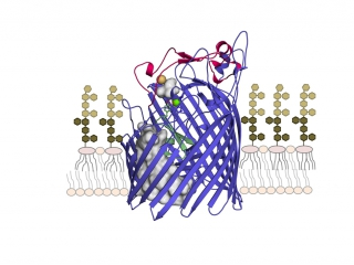 Crystal structure of the outer membrane protein ZnuD